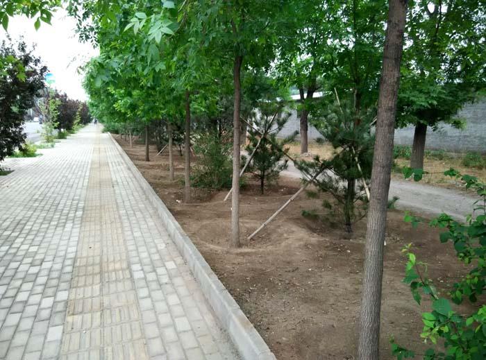 阳坊道路绿化在建工程