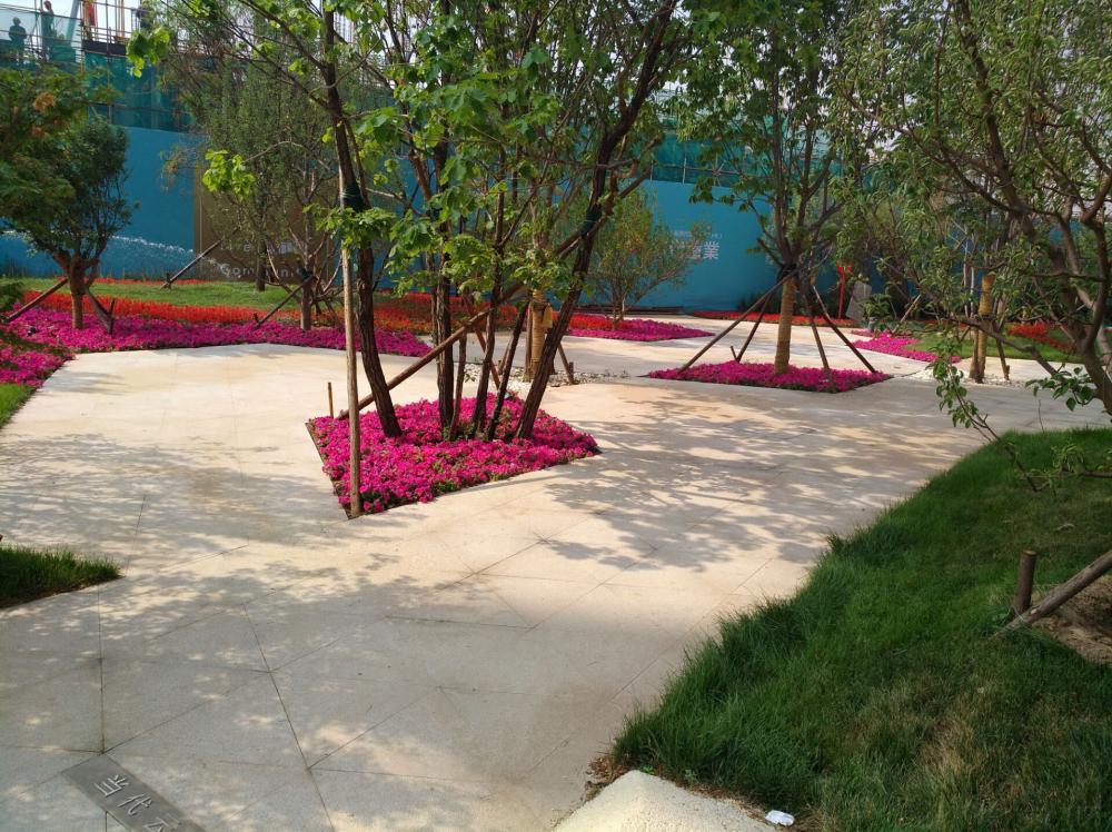 北京市云境MOMA项目启动期园林景观工程